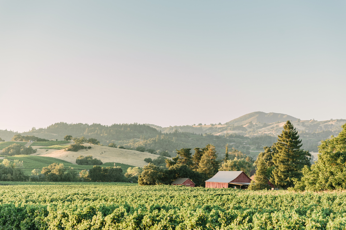 Healdsburg Vineyard Weddings